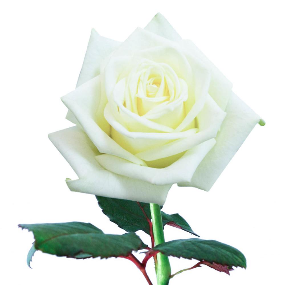картинки с одним цветком универсальный жилет