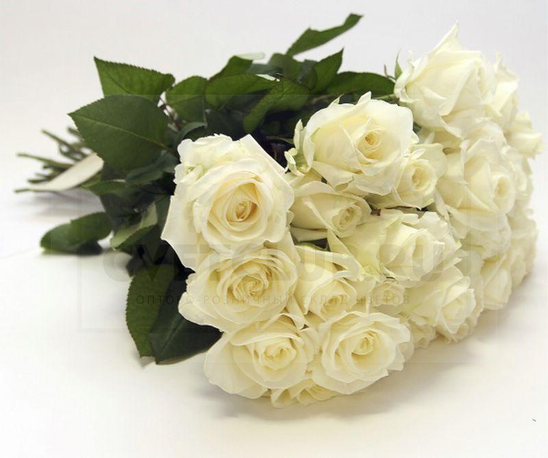 Похудении картинках, открытки с днем рождения женщине красивые с белыми розами елене