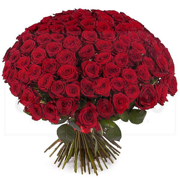 Где купить розы наоми ред дербент цветы с доставкой на 345