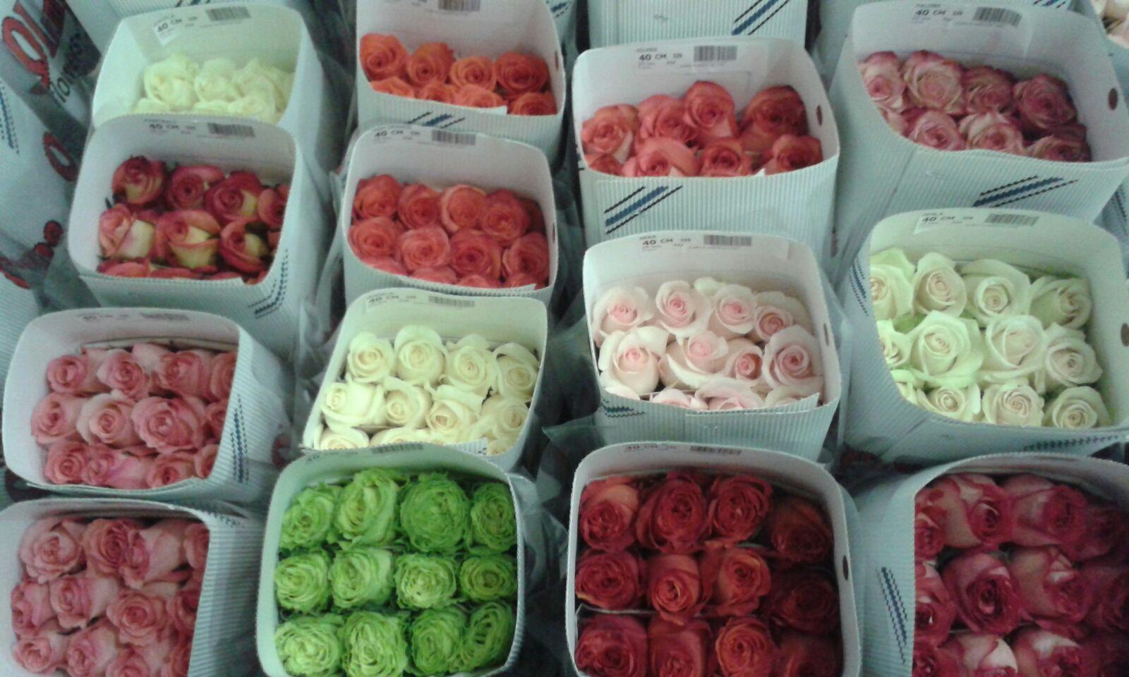 Розы в банче Эквадор