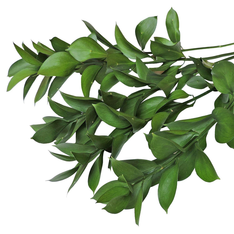 Название зелени для букетов в картинках
